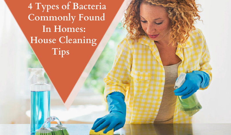 4 Types Of Bacteria Commonly Found In Homes House